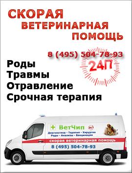 Скорая ветеринарная помощь на дом