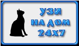 УЗИ для кошки на дом