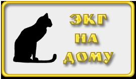 ЭКГ для кошки на дом