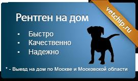 Рентген для собаки на дом